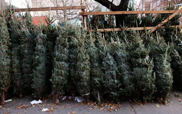 New Yorkers Shop On The Street For Christmas Trees